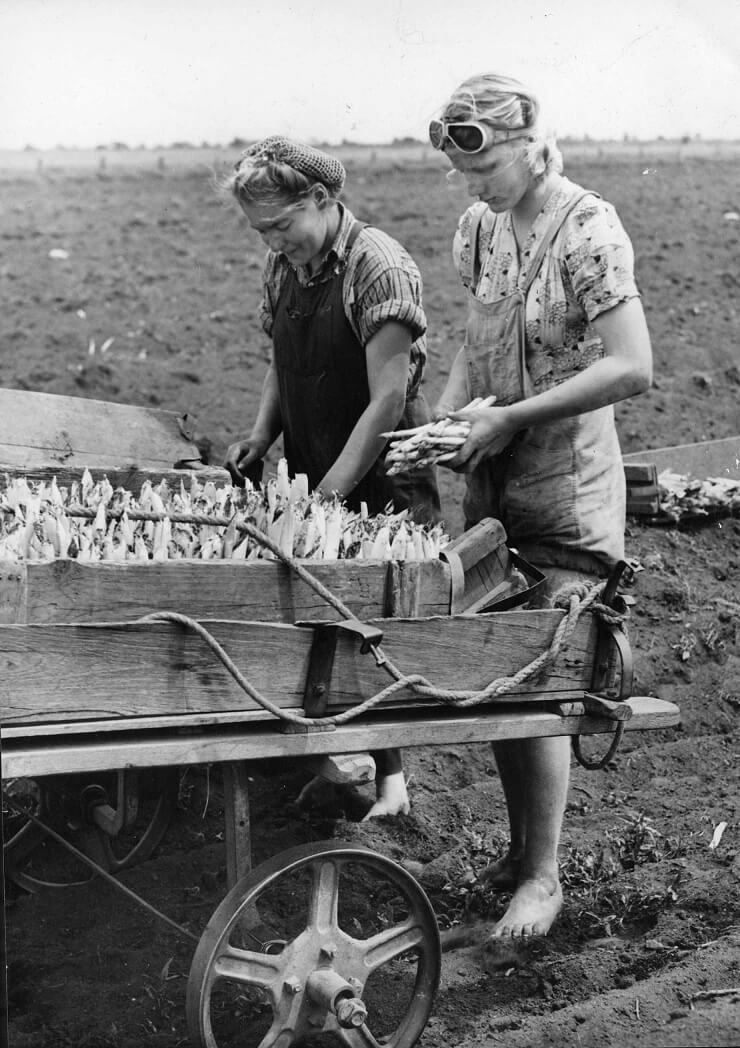 Naida Rose and Jennie Schouewille picking asparagus